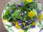 Wild edible salad from your back yard